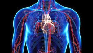 Hareketsiz yaşam akciğerlere tehdit!